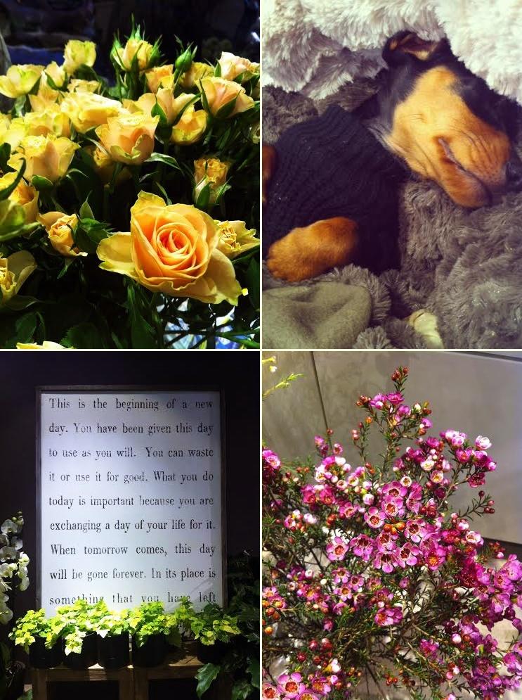 blomma2-tile