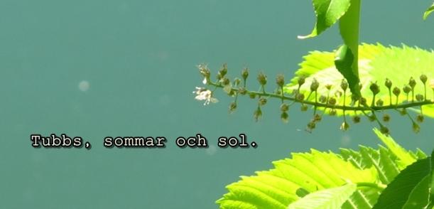 tubbs_sommar_head
